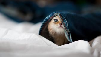 Animals hidden little cat wallpaper