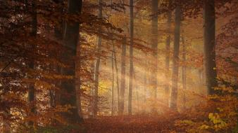 Autumn forests leaves october mystical sun rays Wallpaper