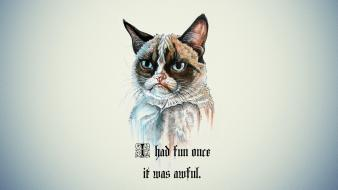Background grumpy cat i had fun once wallpaper
