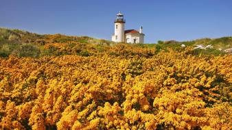 Beach oregon wildflowers wallpaper