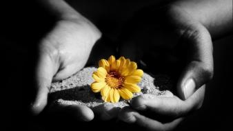 Black sand flowers hands wallpaper