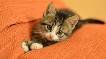 Cats animals kittens wallpaper