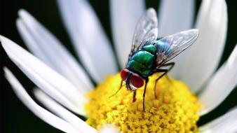 Flowers animals insects wallpaper