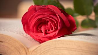 Flowers books roses pages wallpaper