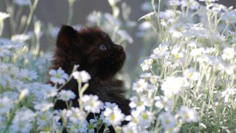 Flowers cats animals kittens white wallpaper