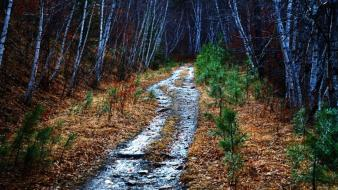 Forests paths hdr photography south dakota mystical wallpaper