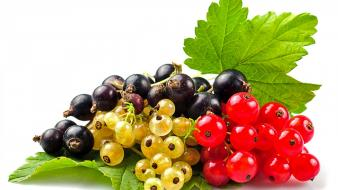 Fruits selective coloring currant wallpaper
