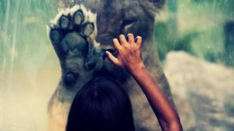 Hands bokeh hollywood undead lions paws locked wallpaper