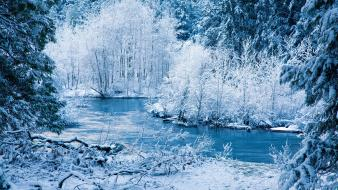 Ice winter snow rivers bushes branches wallpaper