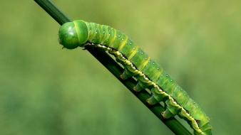 Insects caterpillars Wallpaper