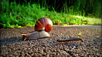 Insects snails wallpaper