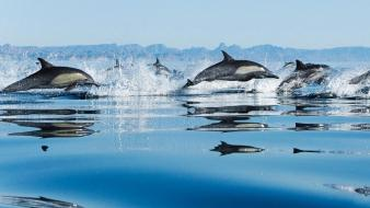 Jumper animal collective dolphins dolphin dream sea wallpaper