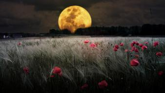 Landscapes dark night flowers moon fields bokeh meadows wallpaper