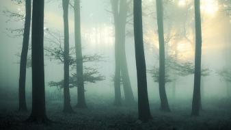 Landscapes nature forest foggy wallpaper