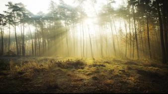 Landscapes nature forest light rays wallpaper