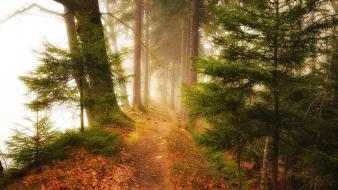 Landscapes nature trees foggy forest path wallpaper