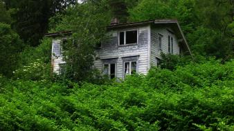 Landscapes trees forests houses abandoned house wallpaper