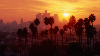 Los angeles palm trees Wallpaper