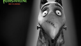 Movies animation frankenweenie wallpaper