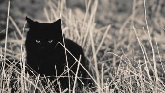 Nature cats animals black cat grass wallpaper
