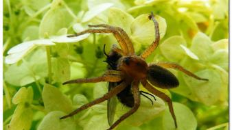 Nature insects macro spiders wallpaper