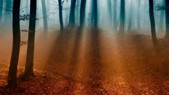 Nature trees forest mist shadows sunlight wallpaper
