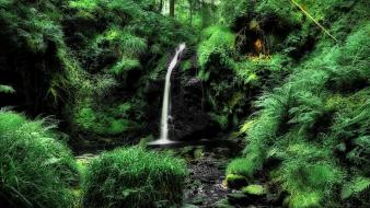 Nature trees wood forests rocks waterfalls wallpaper