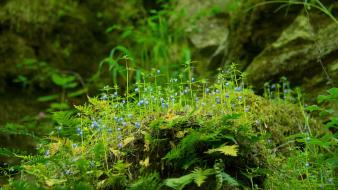 Plants moss wallpaper