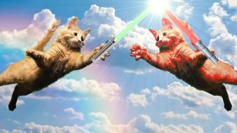 Star wars cats lightsabers sith jedi rainbows wallpaper