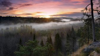 Sunset landscapes nature forest mist pine trees wallpaper