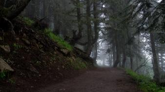 Trees dawn forests fog morning pathway mystical wallpaper