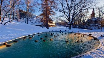 Winter snow trees ducks ponds wallpaper