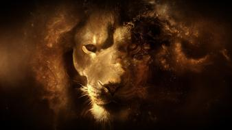 Animals digital art artwork lions wallpaper