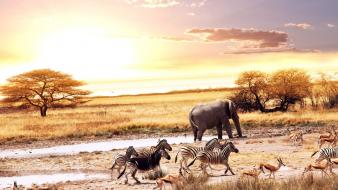 Animals zebras elephants africa gazelle savanna wallpaper