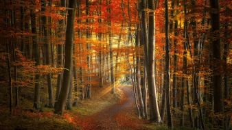 Autumn red forests paths light rays mystical Wallpaper