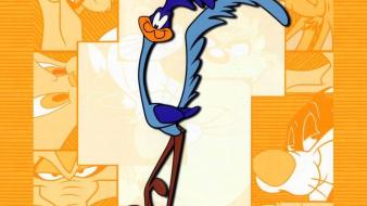 Cartoons roadrunner looney tunes wallpaper