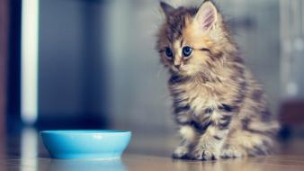Cats food baby animals wallpaper
