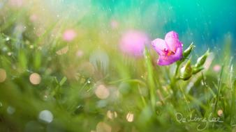 Nature flowers macro watermark Wallpaper