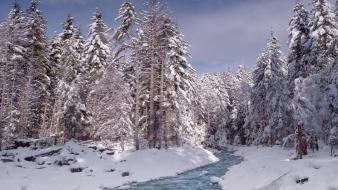 Snow trees streams wallpaper