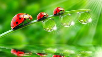 Water minimalistic grass bugs artwork drops ladybirds wallpaper