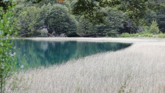White grass lakes flora reflections weeds skies wallpaper