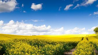 Clouds landscapes nature flowers wallpaper
