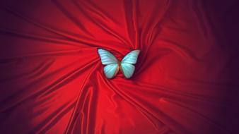 Contrast colors butterfly symbolism butterflies atmospheric beautiful wallpaper