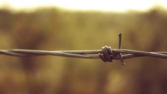 Depth of field barbed wire wallpaper
