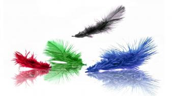 Green blue black red artistic feathers wallpaper