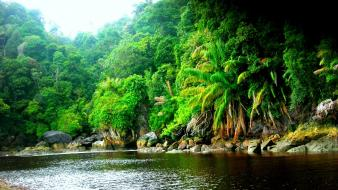 Green water landscapes nature trees forests rocks lakes wallpaper