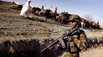 Isaf sheepherder kandak ana national army taliban Wallpaper
