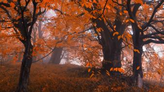 Landscapes trees autumn (season) orange leaves old friends wallpaper