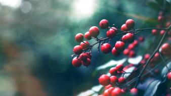 Macro hdr photography depth of field berries wallpaper