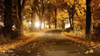 Nature trees autumn (season) roads wallpaper